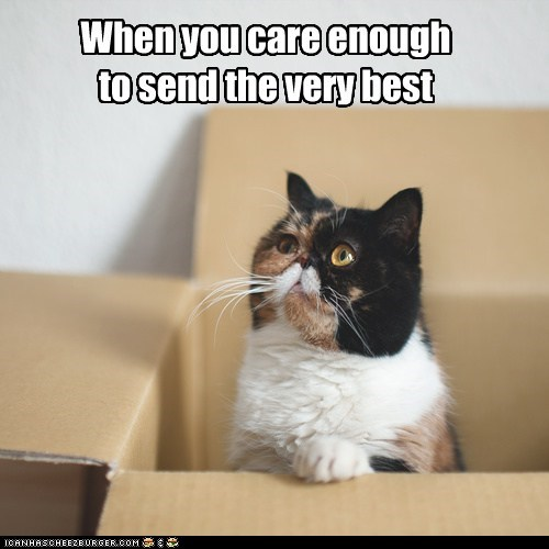 cat care box funny delivery - 7043367680
