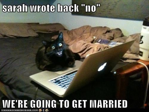 cat marriage romance rejection computer funny - 7043391232