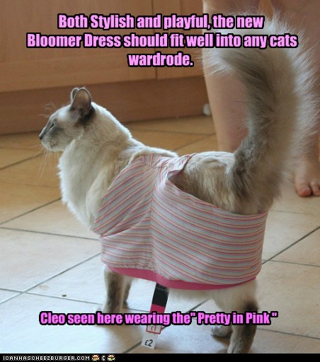 "Both Stylish and playful, the new Bloomer Dress should fit well into any cats wardrode. Cleo seen here wearing the"" Pretty in Pink """