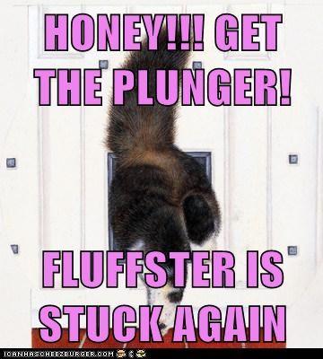 cat butt fat stuck funny - 7044021760