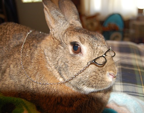 Bunday bunnies reader squee pets squee rabbits