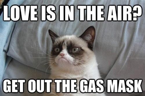 love,Grumpy Cat,Valentines day