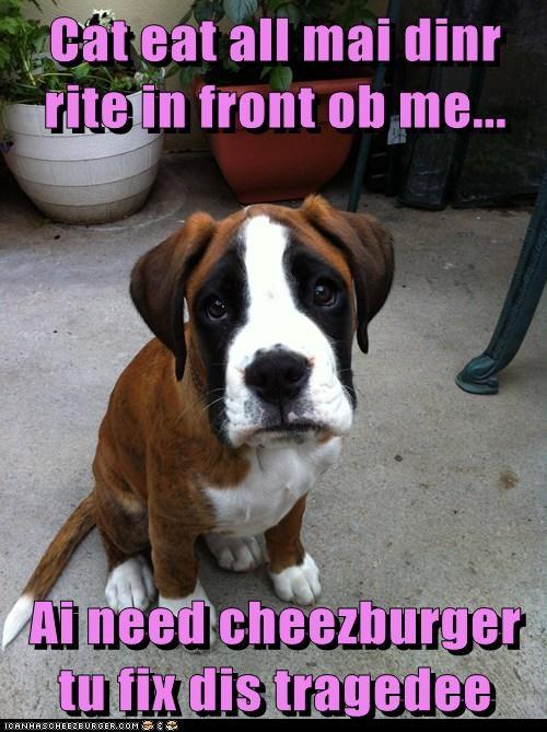 Cheezburger Image 7044392192