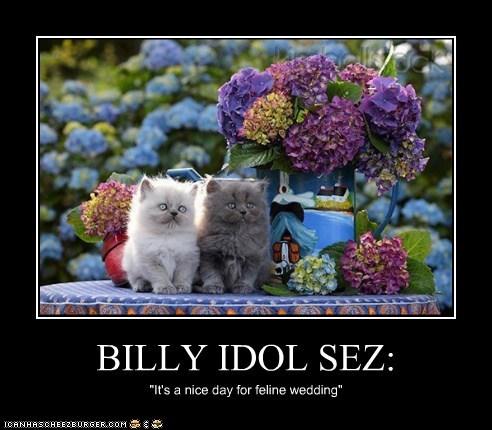 BILLY IDOL SEZ: