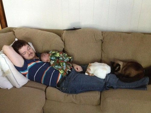 baby,sleeping dad,nap time,Cats