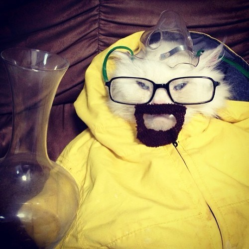 outfit,breaking bad,walter white,dress up,Chemistry,Cats