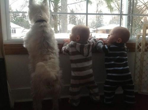 daww twins dogs - 7044716288