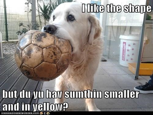 balls dogs tennis balls shopping golden retrievers