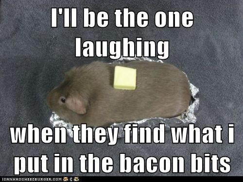 poop,guinea pigs,butter,baked potato,bacon bits,laughing