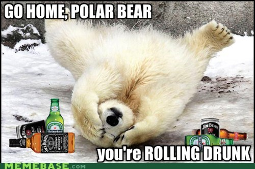 go home your drunk,rolling,polar bears,headaches