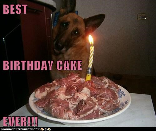 cake,dogs,german shepherd,birthday,meat