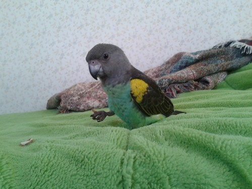 reader squee pets parrots birds - 7045235968
