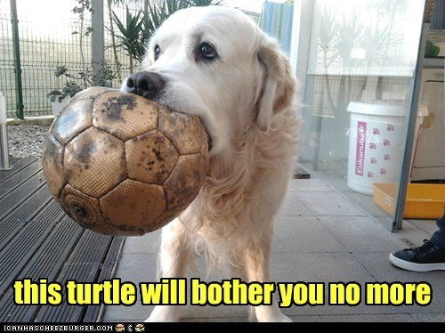 this turtle will bother you no more