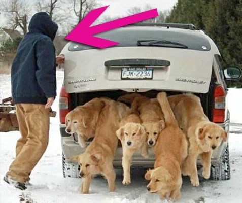 who let the dogs out baha men answered - 7047042560