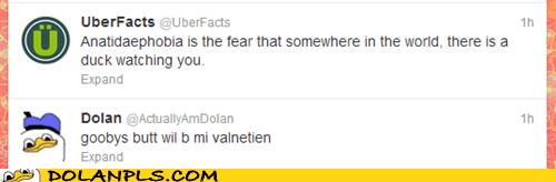 anatidaephobia,valentine,twitter,actually am dolan