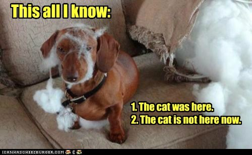 dogs,dachshund,Cats,wasnt me