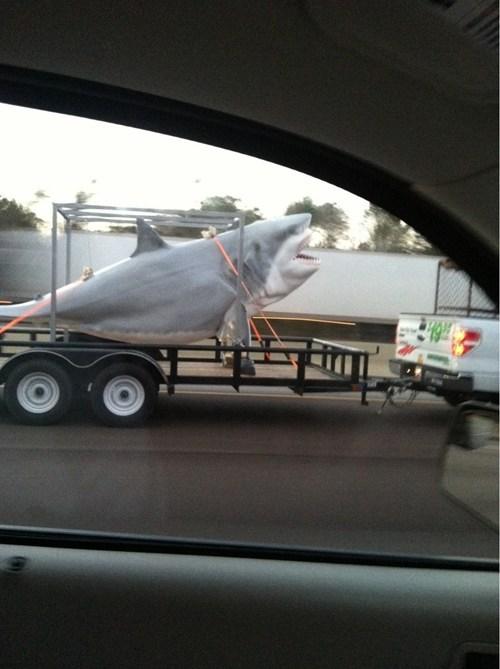 trailers shark - 7047427328