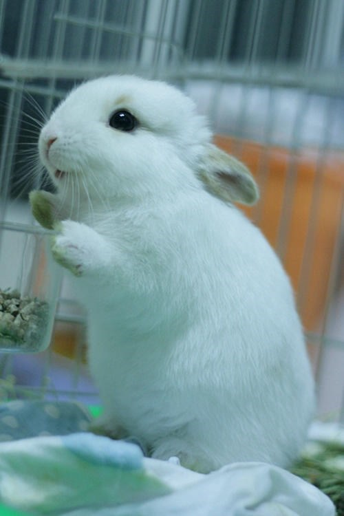 Bunday,noms,happy,rabbit,bunny,whiskers,smile