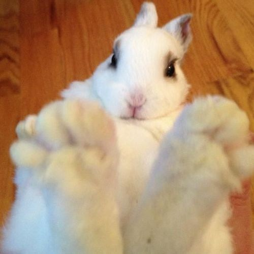 Bunday mystery solved feet big foot rabbit bunny squee - 7047703552