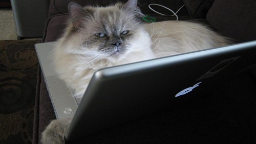 twitter lolspeak feature Cats failbook g rated - 7047778048