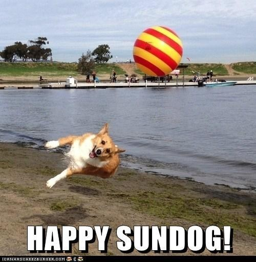 dogs happy sundog ball beach corgi Sundog jumping