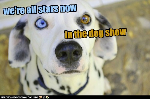 we're all stars now in the dog show