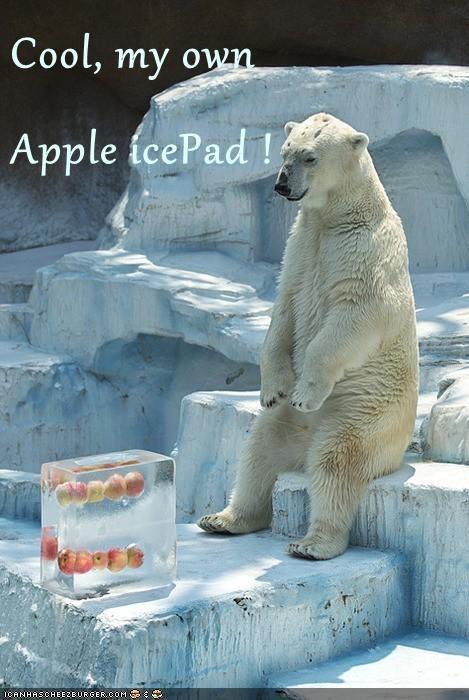 ipad polar bears frozen apples - 7048130048