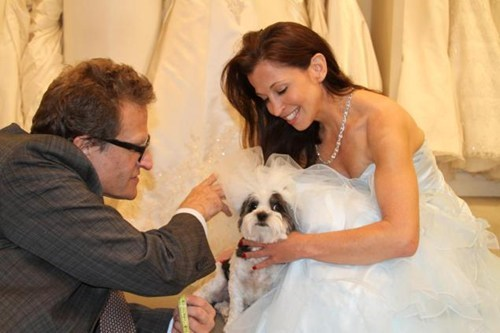 dogs most expensive dog wedding wedding Guinness World Record - 7048155904