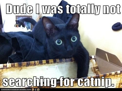 Dude I was totally not searching for catnip.