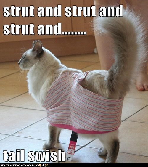strut and strut and strut and........ tail swish