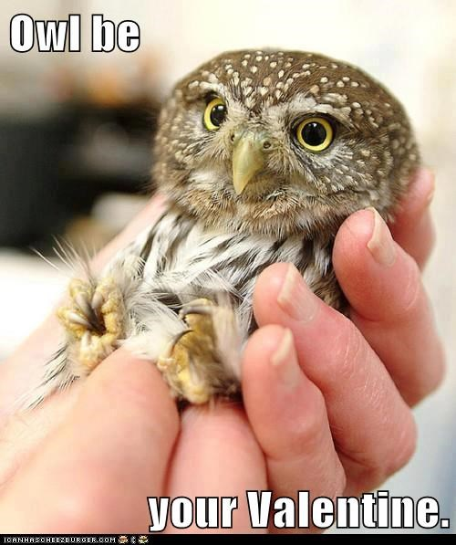Owl be your Valentine.