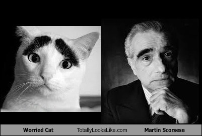 cat,eyebrows,martin scorsese,worried,TLL