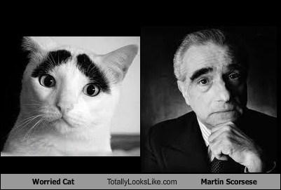 cat eyebrows martin scorsese TLL - 7049008896