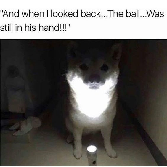scary dogs dog memes Memes story - 7049221