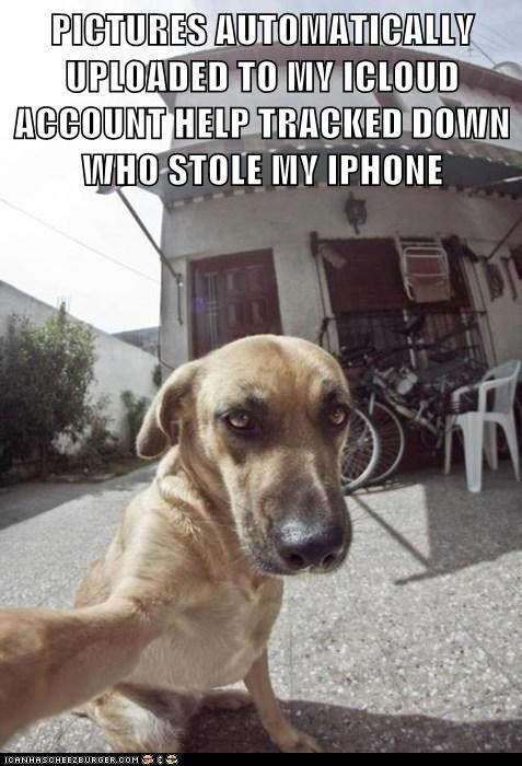 dogs selfie iPhones taking pictures what breed - 7049433856