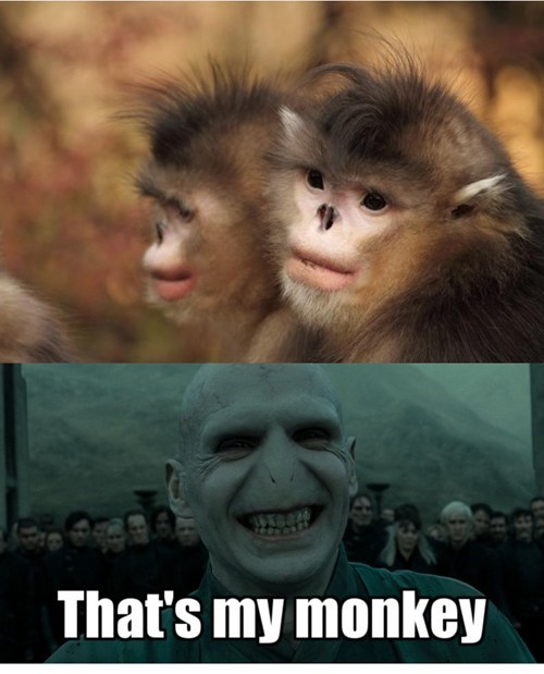 voldemort that's my x monkey - 7049457664