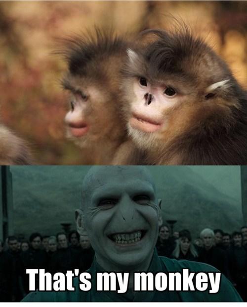 voldemort that's my x monkey - 7049457664