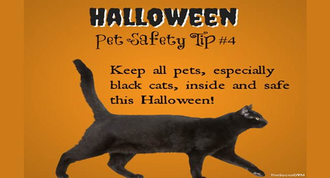 pets halloween safety tips animals - 7049733