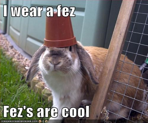 bunnies,FEZ,doctor who,fezzes are cool