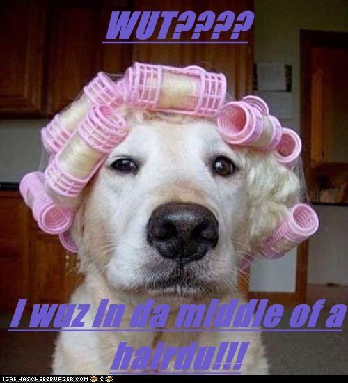 WUT????  I wuz in da middle of a hairdu!!!