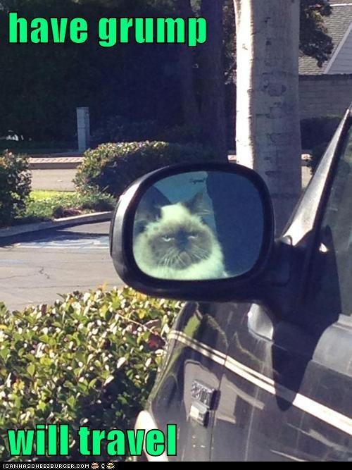 cat drive car grumpy funny - 7050228480