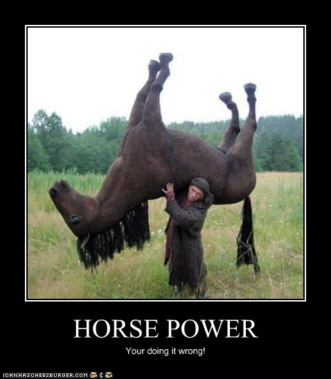 horse power youre-doing-it-wrong carrying horses - 7050455552