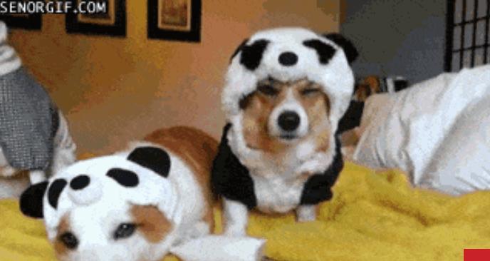 pets halloween photos funny animals - 7050501