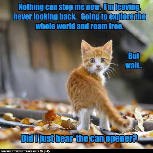 kitten cute food Cats - 7050680320