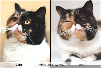 2001 Totally Looks Like 2013