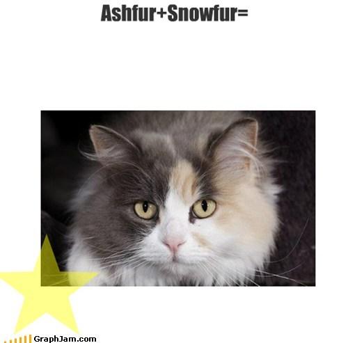 Ashfur+Snowfur=