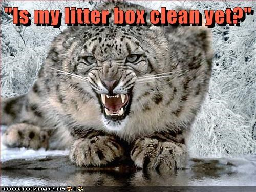 clean,snow leopards,angry,litter box