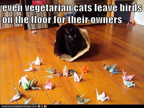 cat birds vegetarian funny - 7051386880