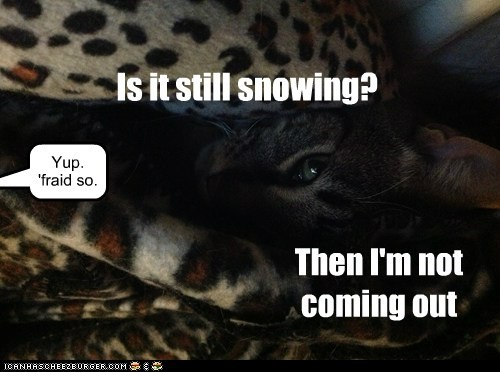 Is it still snowing? Yup. 'fraid so. Then I'm not coming out
