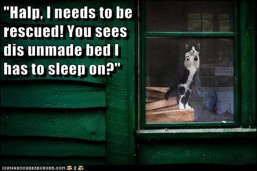 cat bed house funny - 7051460352